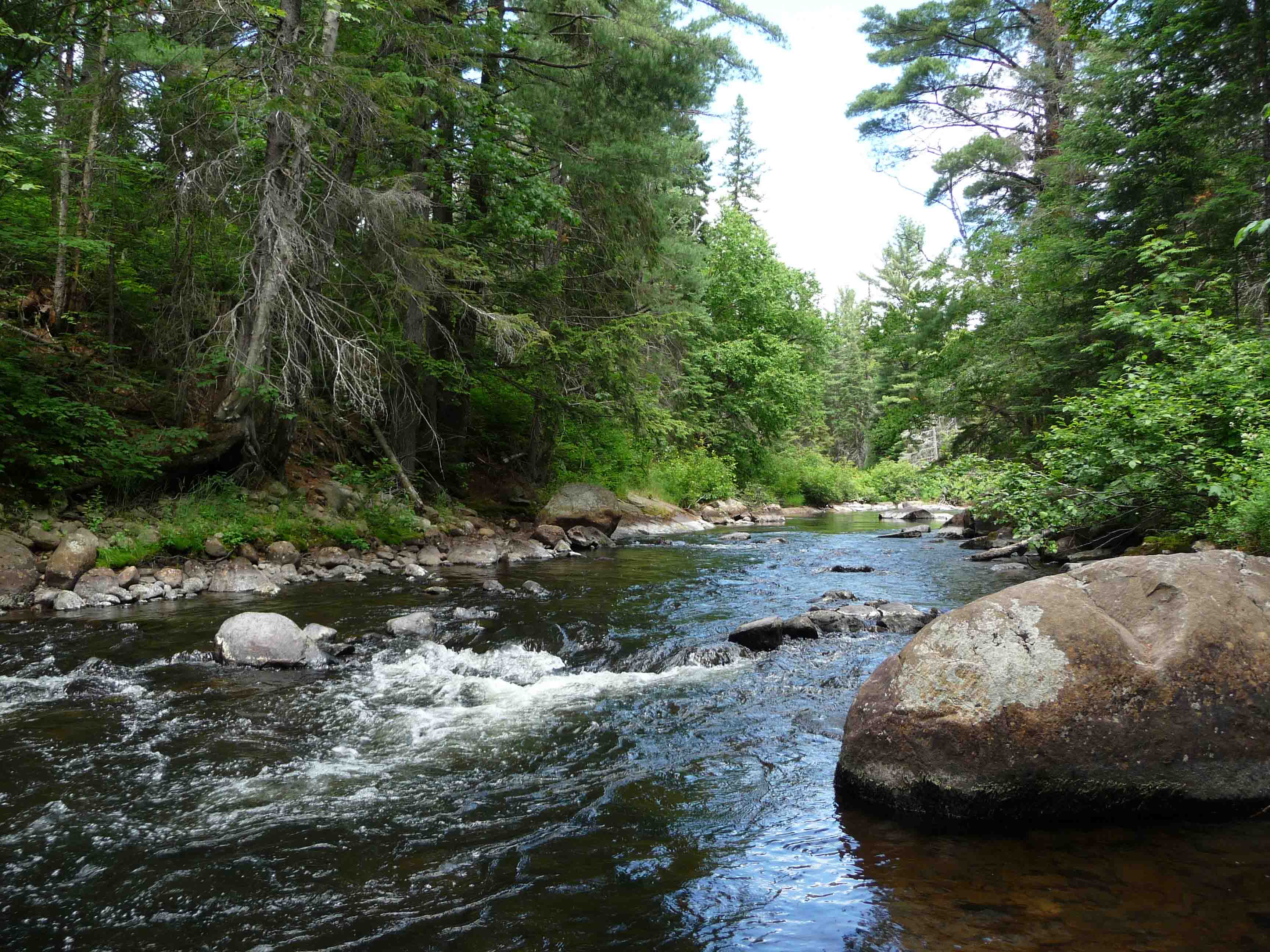 River In The Algonquin Park Walking Trail Whiskey Rapids